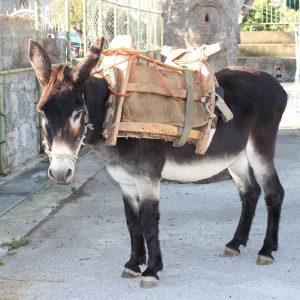 Donkey Zadvarje