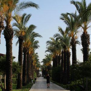 arbeiten unter palmen