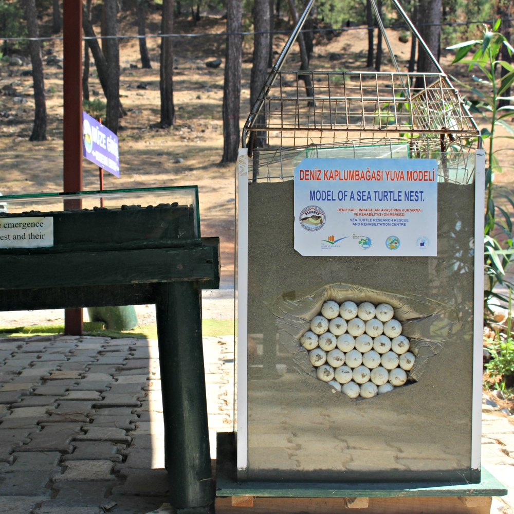 Eingang Rehabilitationszentrum Schildkröten
