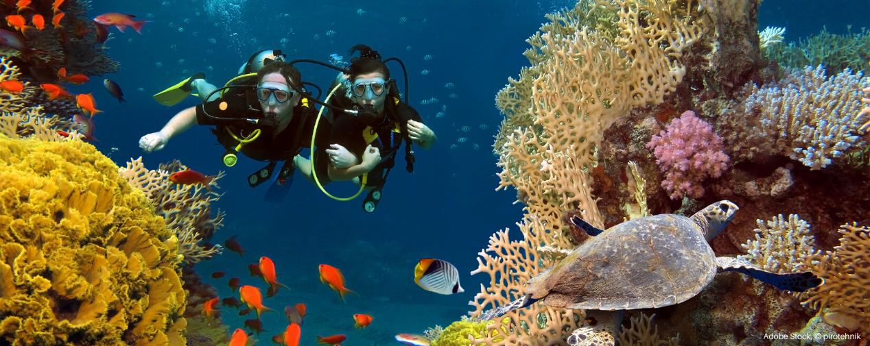 Header Korallenriff Tauchen Ägypten TUI BLUE Blog