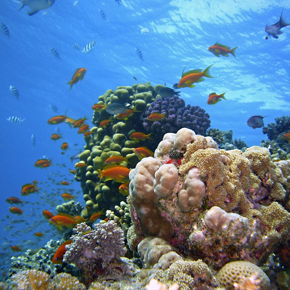 Coral reef at the Red Sea diving areas in Egypt TUI BLUE Blog