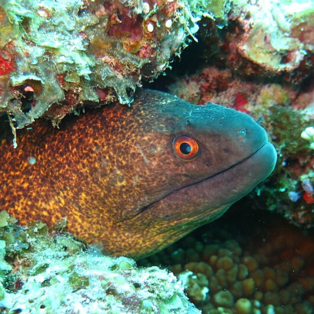 Moray Coral Reef Red Sea Diving Areas in Egypt TUI BLUE Blog