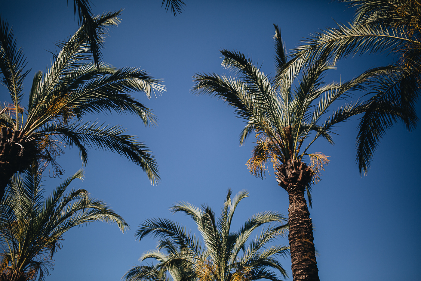 Summer holidays among the palms