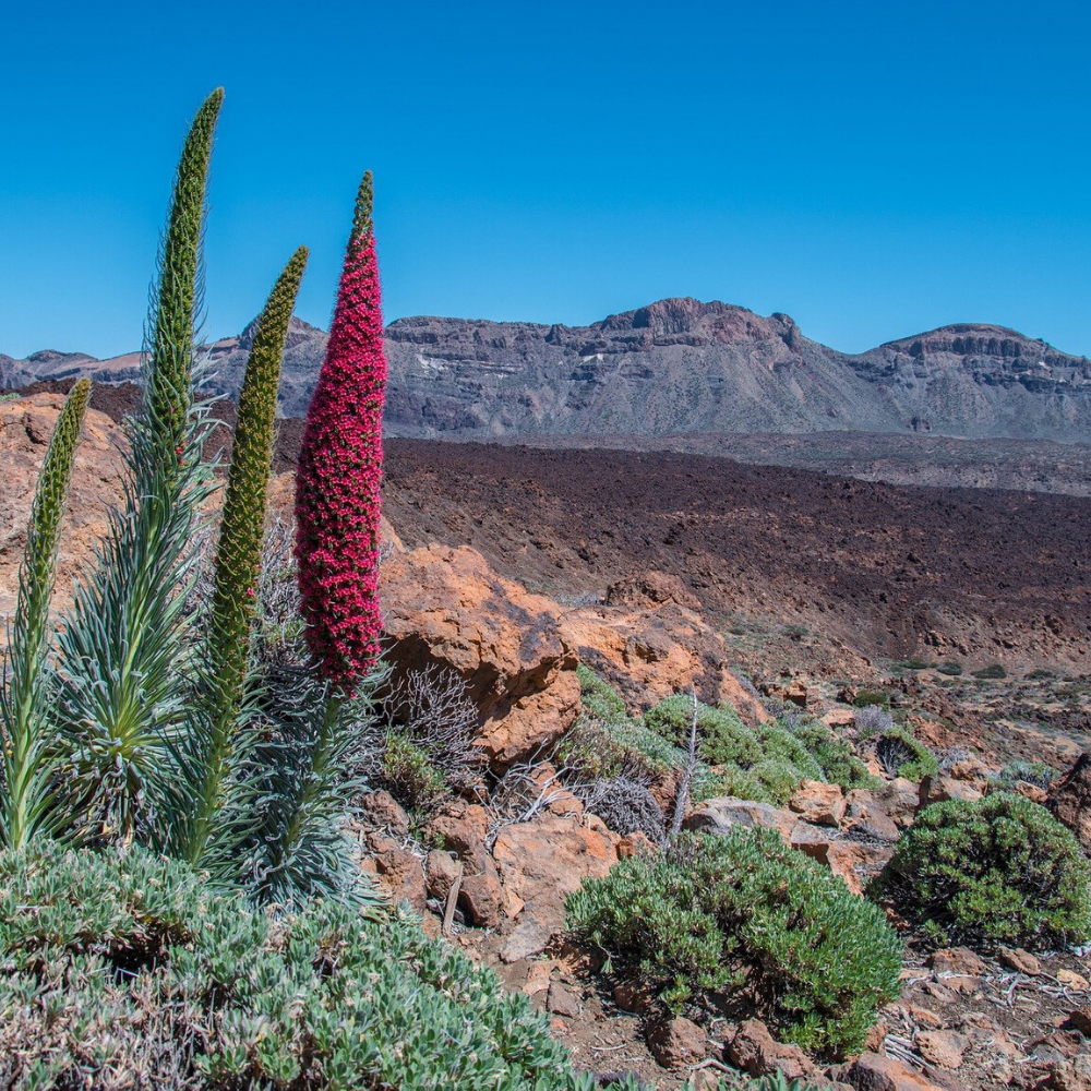 Holiday Canary Island El Teide National Park Tenerife