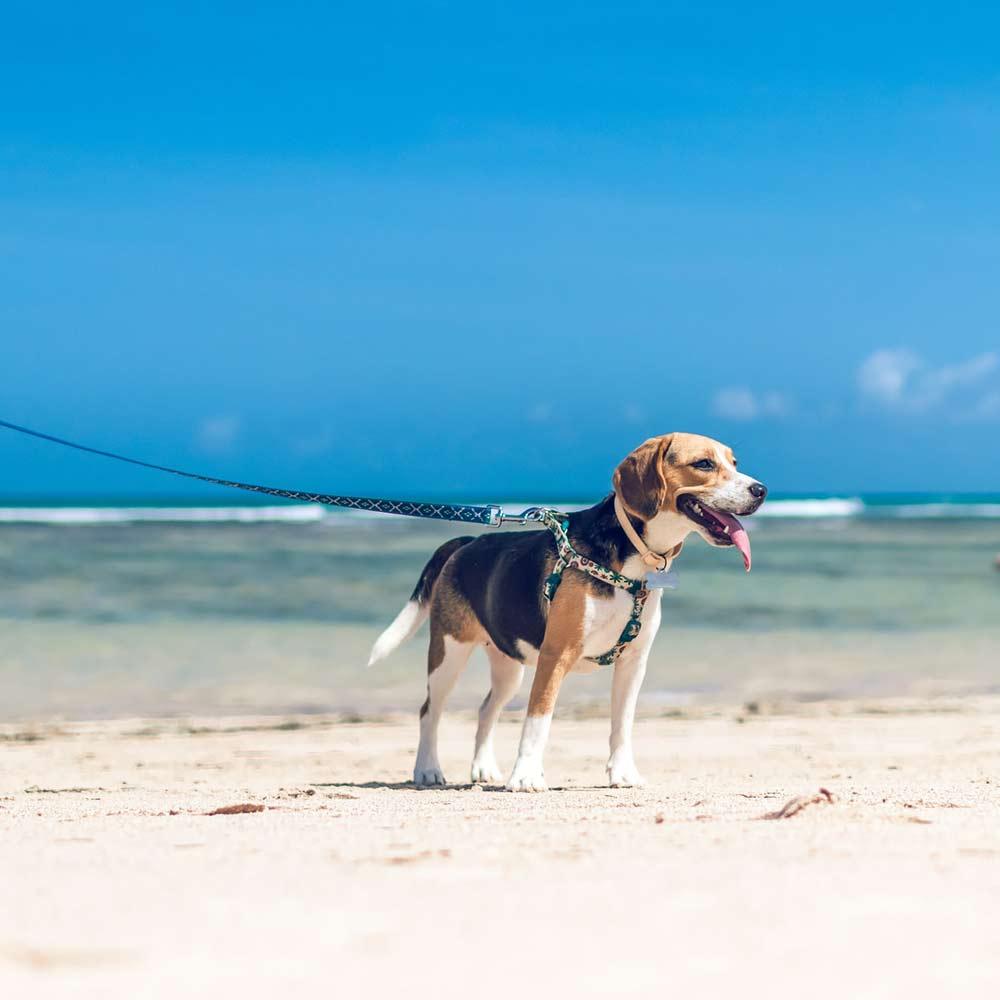 Hund an leine am strand