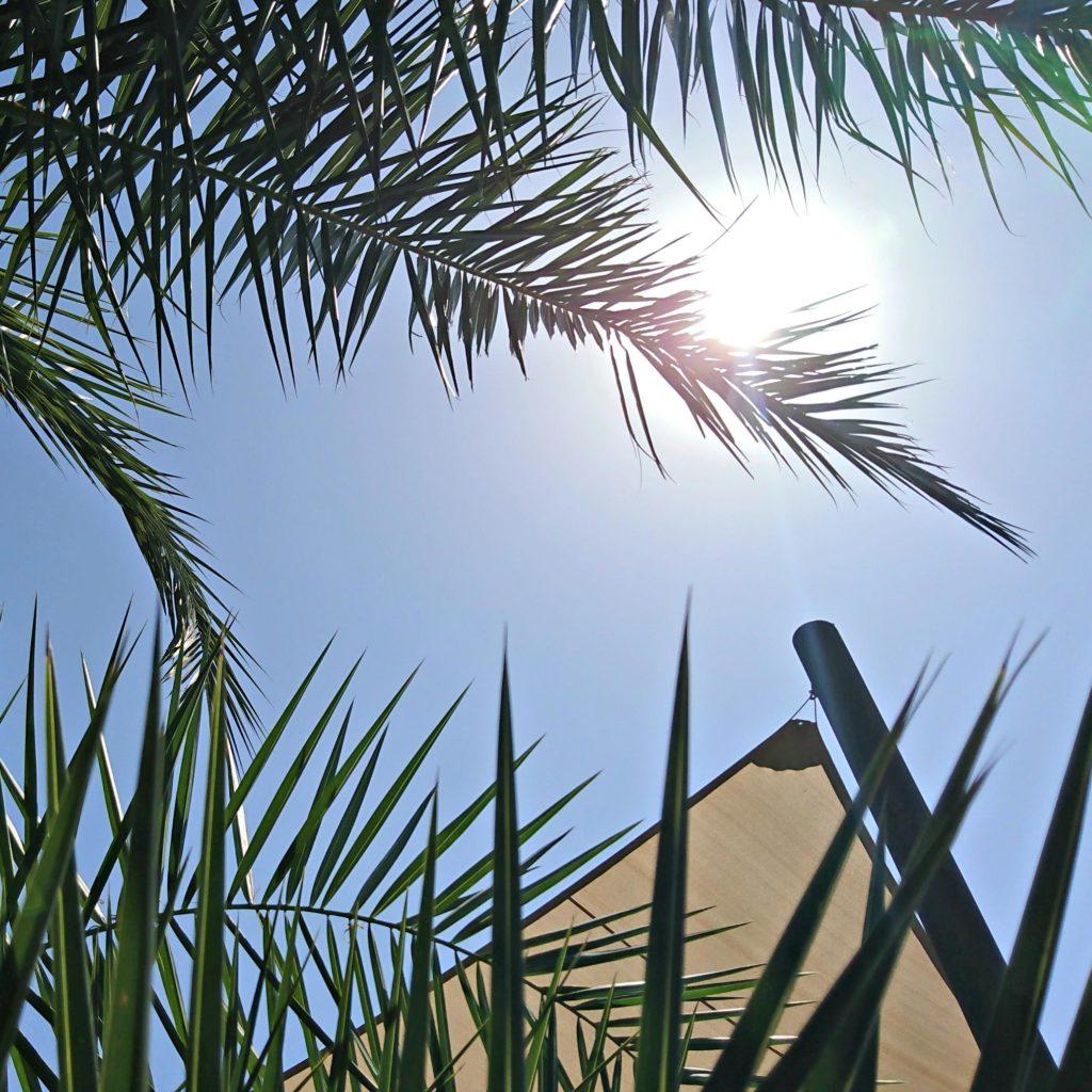 autogenes training unter palmen