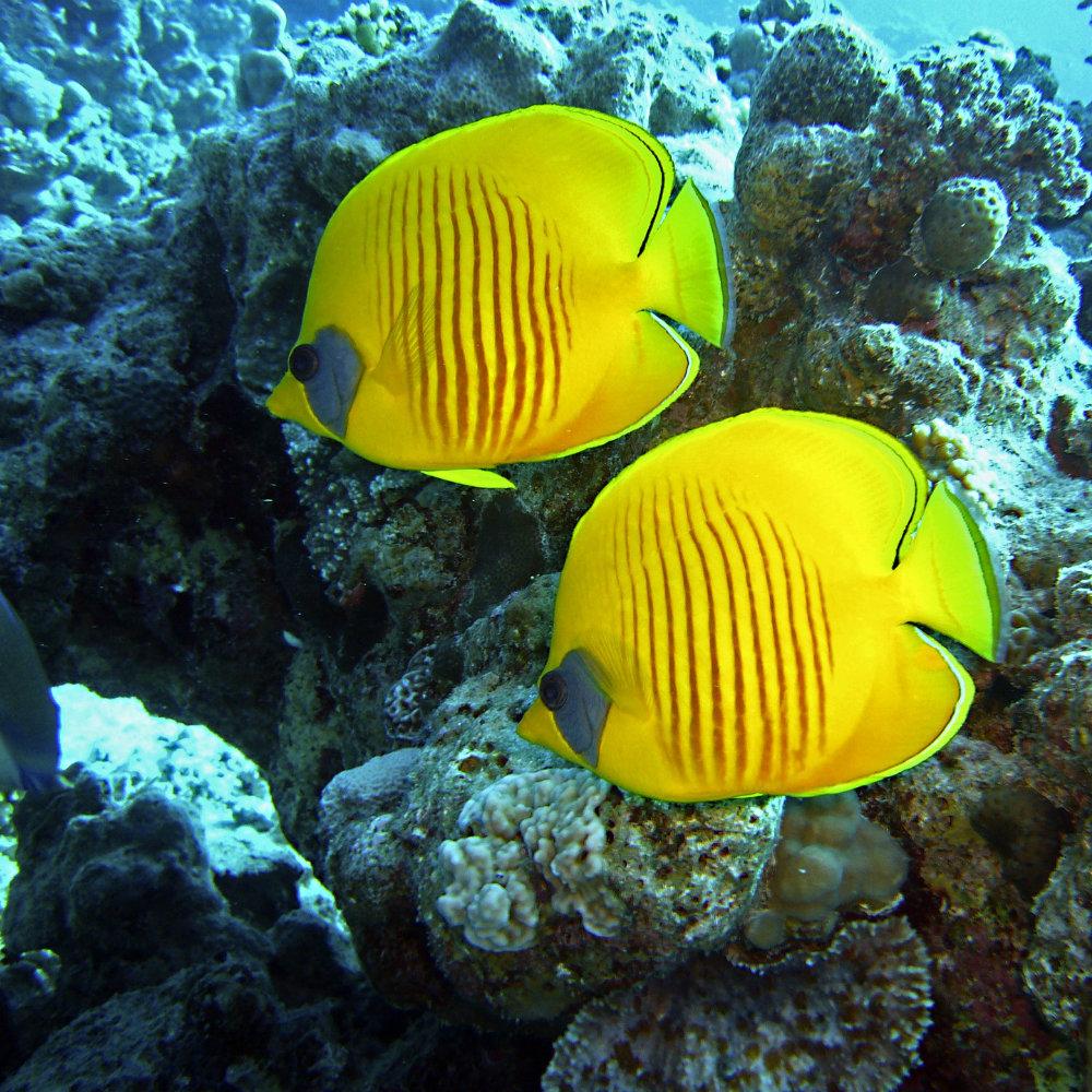 Diving Ägypten Submarine Tour