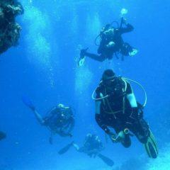 Tauchen in Tunesien: Djerbas Unterwasserwelten erforschen