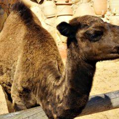 Vielfältiges Djerba: Street-Art, Jedi, Kamele und Karawanen
