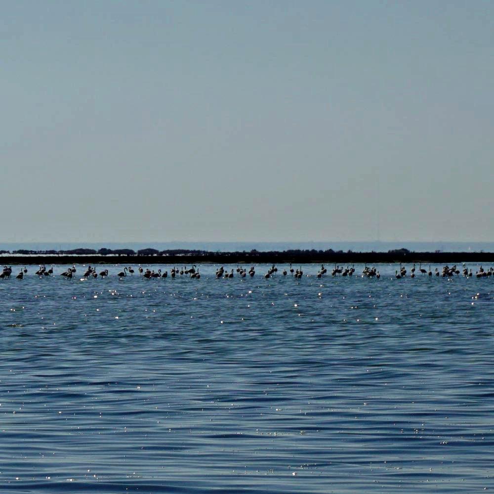 djerba flamingos