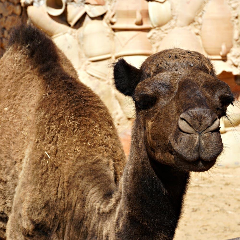 djerba guellala kamel