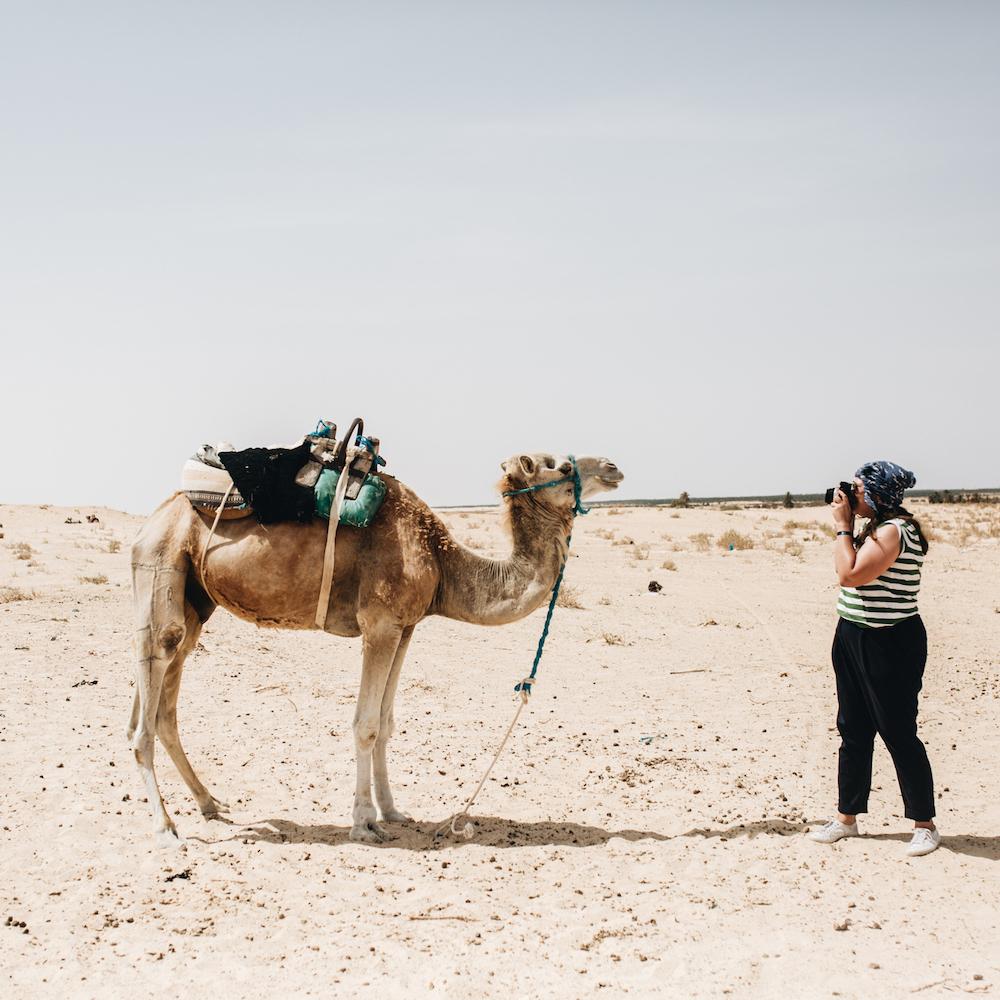 Douze Tunesien Ausflug Kamele