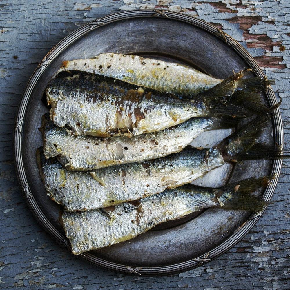 Fisch Portugal Sardine