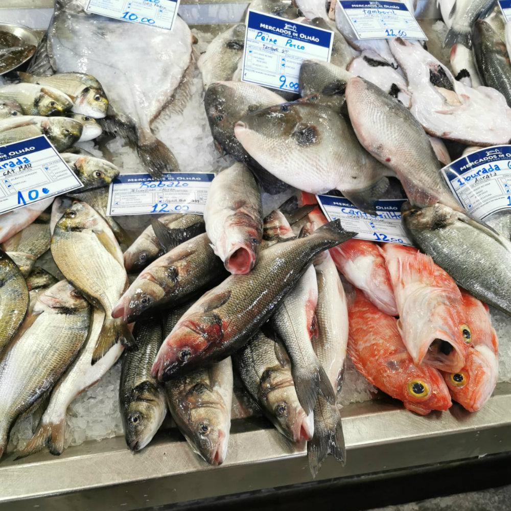 Fish Market Olhao fish