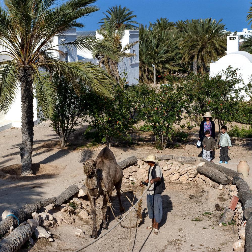 Djerba Héritage Esel