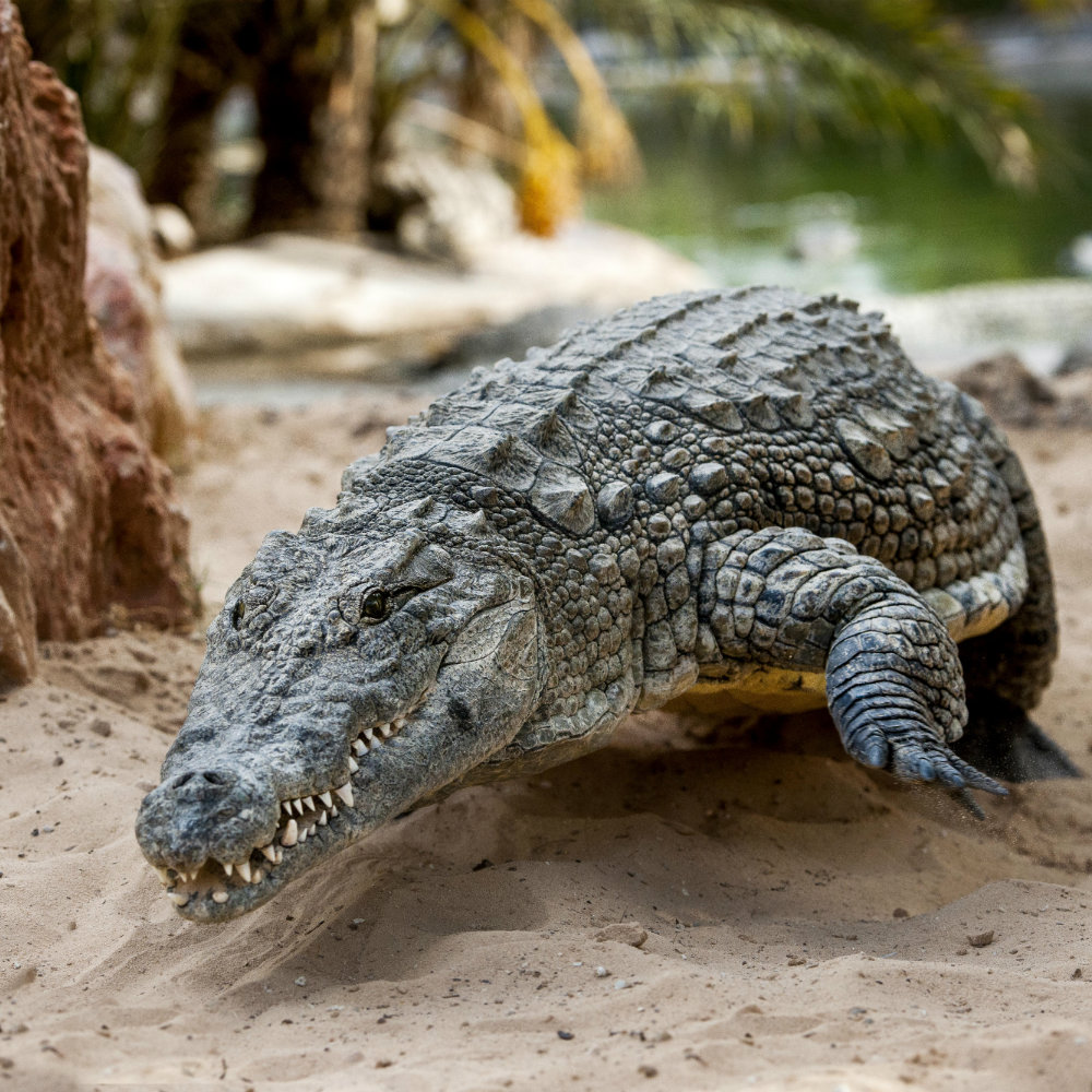 Crocodile Djerba Explore Park