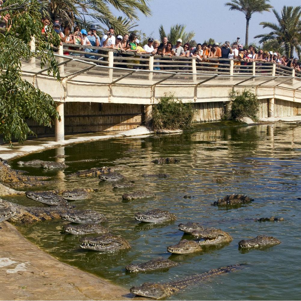 krokodilfarm Djerba Explore Park Krokodile bestaunen
