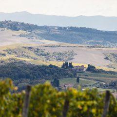 Weinprobe in der Toskana: In 4 Schritten zum Kenner