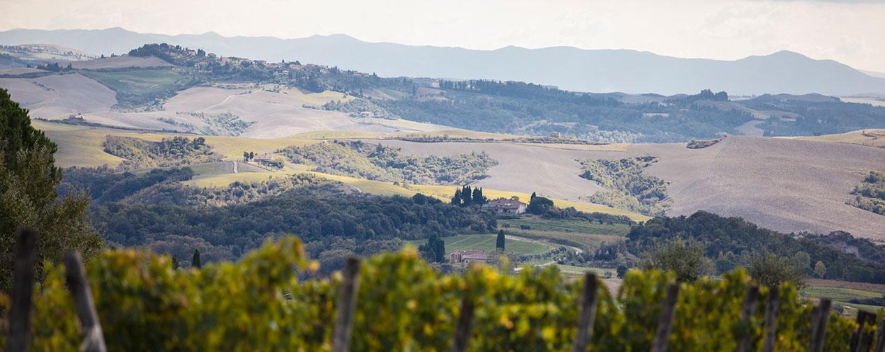 Landschaft mit Weinbergen urlaub auf dem weingut italien