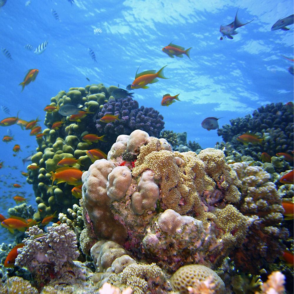 Makadi Bay Rotes Meer