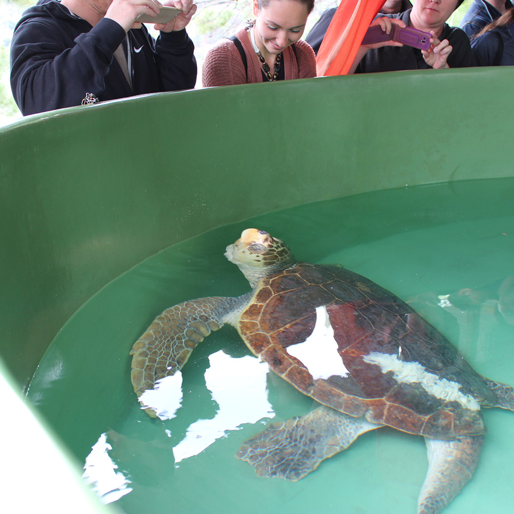 Tank with a turtle in the Turtle Rehabilitation Centre