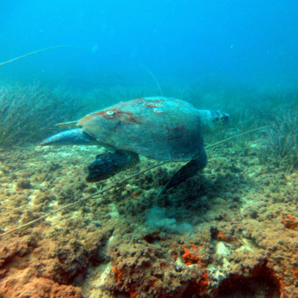 sea animal underwater diving djerba