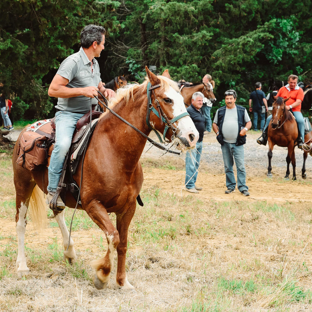 pferde reiten castelfalfi