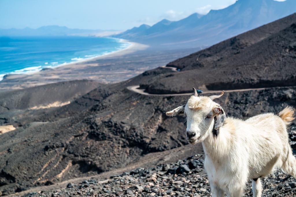 Fuerteventura: Ein Blick auf den Strand von Cofete