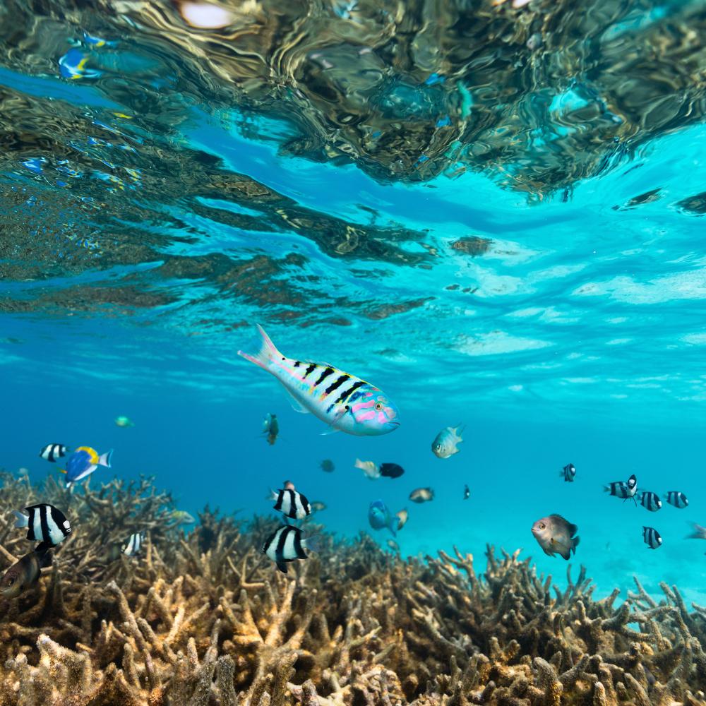 Tauchen Sansibar Fisch