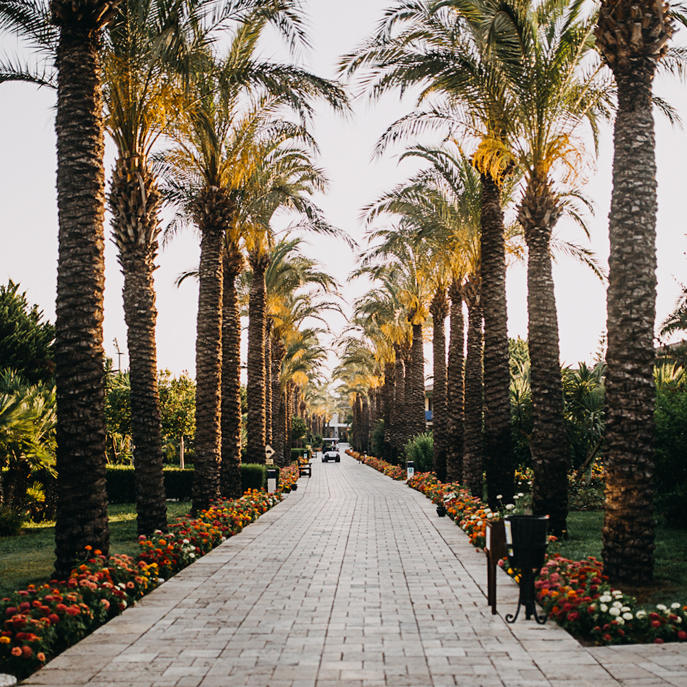 TUI BLUE Palm Garden Hotelanlage